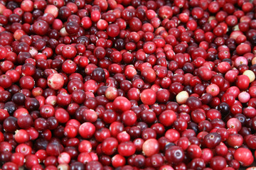 A lot of cranberries