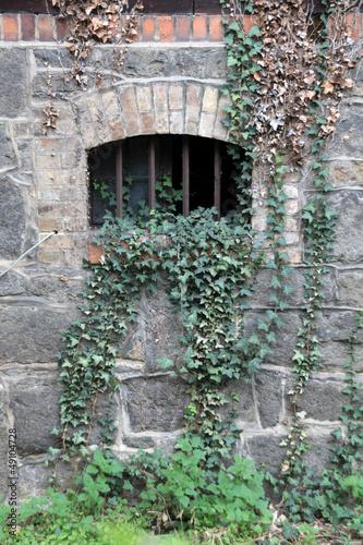 Kellerfenster mit gitter und efeu stockfotos und lizenzfreie bilder auf bild - Kellerfenster mit gitter ...