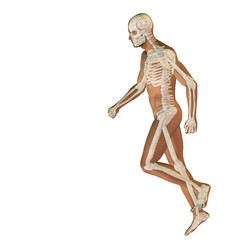 High resolution conceptual human for anatomy,medicine, health