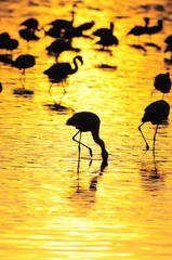 Gold sunrise with flamingo silhouette