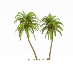 Palmen Kokosnüsse isoliert
