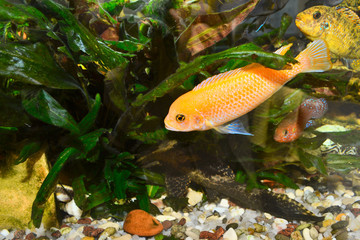 Colorful aquarium with fish