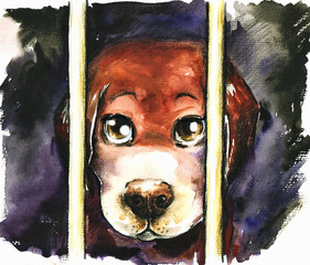 A sad dog in an animal shelter waiting for adoption.Watercolors.