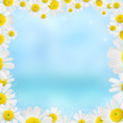 beautiful camomile floral frame on a blue background
