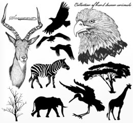 Collection of high detailed hand drawn animals and silhouettes o