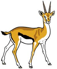 thopson gazelle