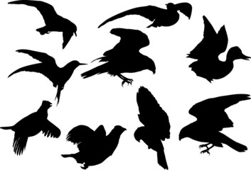 nine flying birds silhouettes isolated on white