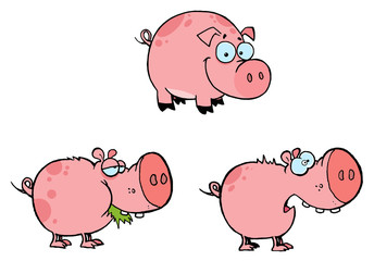 Pink Pigs Collection