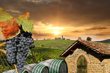 Wall Mural - Chianti, famous vineyard in Italy