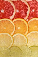 Tuinposter Plakjes fruit Hintergrund aus Grapefruit, Orangen, Zitronen und Limonen
