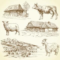 rural landscape, village, farm animals