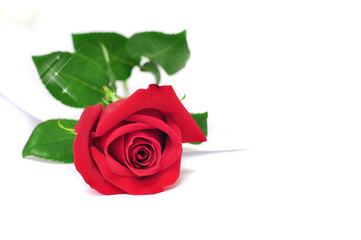 Red rose isolated on a white background with a piece of paper