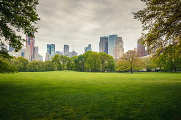 Fototapete - Central park at rainy day