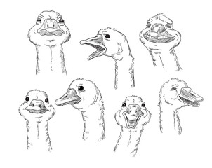 goose with different facial expressions