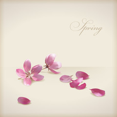 Floral vector cherry blossom flowers spring design