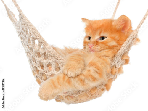second hand cat toys