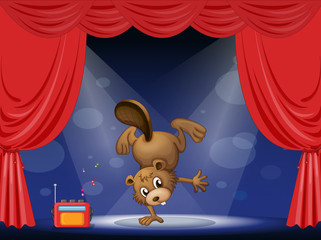 A beaver at the stage