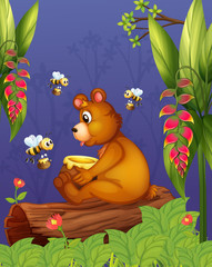 A bear with three bees in the forest