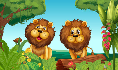 Two lions in the forest