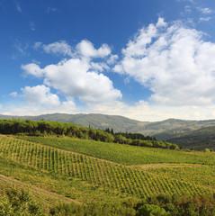 Fototapete - Chianti, famous vineyard in Italy
