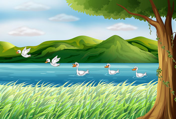 Wall Murals River, lake Five ducks in the river