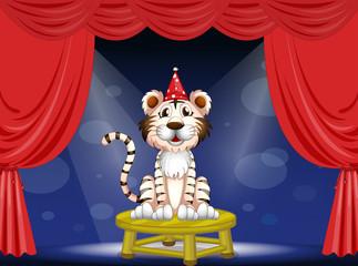 A tiger performing