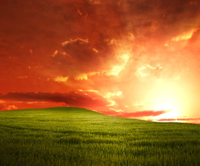 Green Meadow sunset