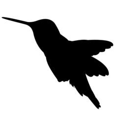 Silhouette Kolibri Vektor