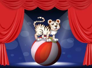 Keuken foto achterwand Beren A tiger performing at the circus