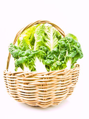 Fresh  baby bok choy and cos salad in ratten basket isolated on