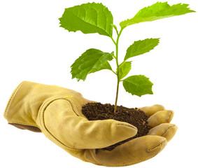 concept protection nature, main gantée, arbre