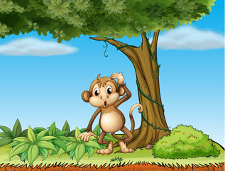 A monkey under a big tree