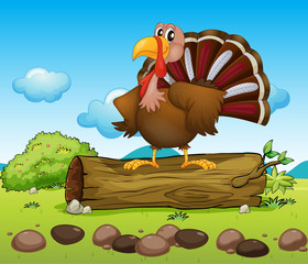 A turkey standing above a wood