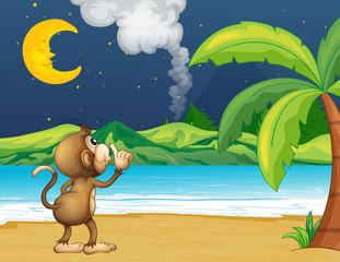 A monkey strolling in the beach