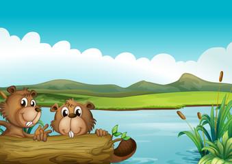 Canvas Prints River, lake Two beavers