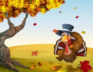 A turkey in an autumn scenery