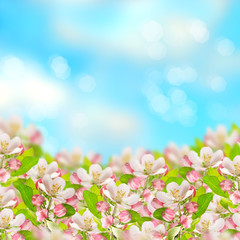 Foto op Textielframe Bloemen apple blossoms over blurred blue sky background