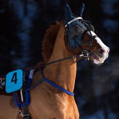 cavallo con protezioni invernali