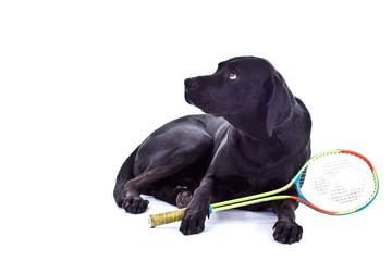 Hund mit Schläger