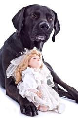 Hund liebt Hochzeitspuppe