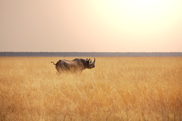 Photo sur Aluminium Rhino Rhino