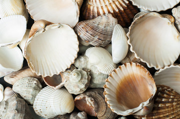 Scattered seashells background