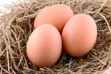Chicken eggs in hay nest