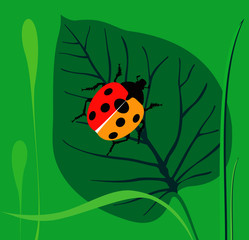 Ladybird  on a green leaf