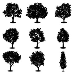 Tree silhouettes vector set