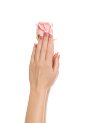 Women's hands are holding a rose