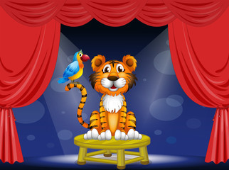 A tiger and a parrot in the circus