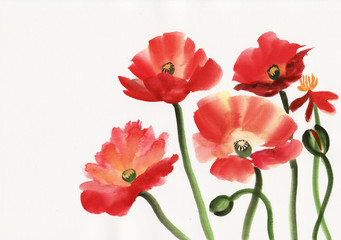 Watercolor painting of red poppies