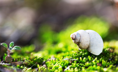 Green grass and snail