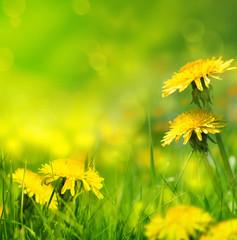 Fototapete - Beautiful spring flowers background